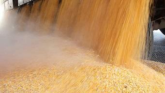 corn_in_bulk17m