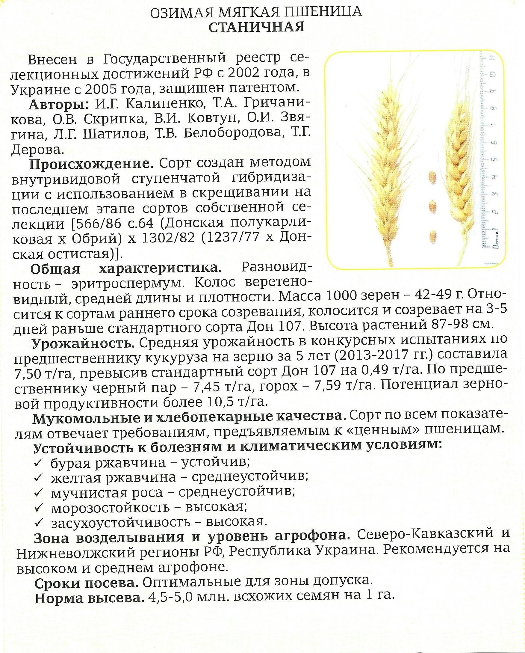 stanichnaya