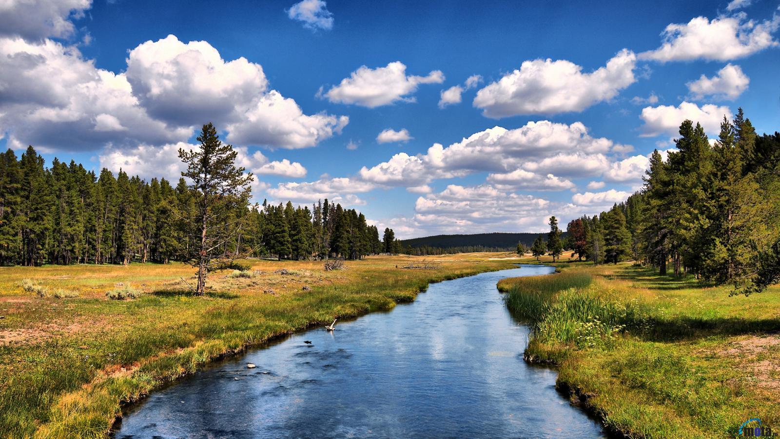Hvojnye-les-Coniferous-forest-Best-Hd-wallpapers-foto-picture-Krasivye-fotografii-hvojnyh-lesov-mira-dlya-rabochego-stola-oboi-v-vysokom-kachestve-hd-izobrazheniya-s-razresheniem-1600x900