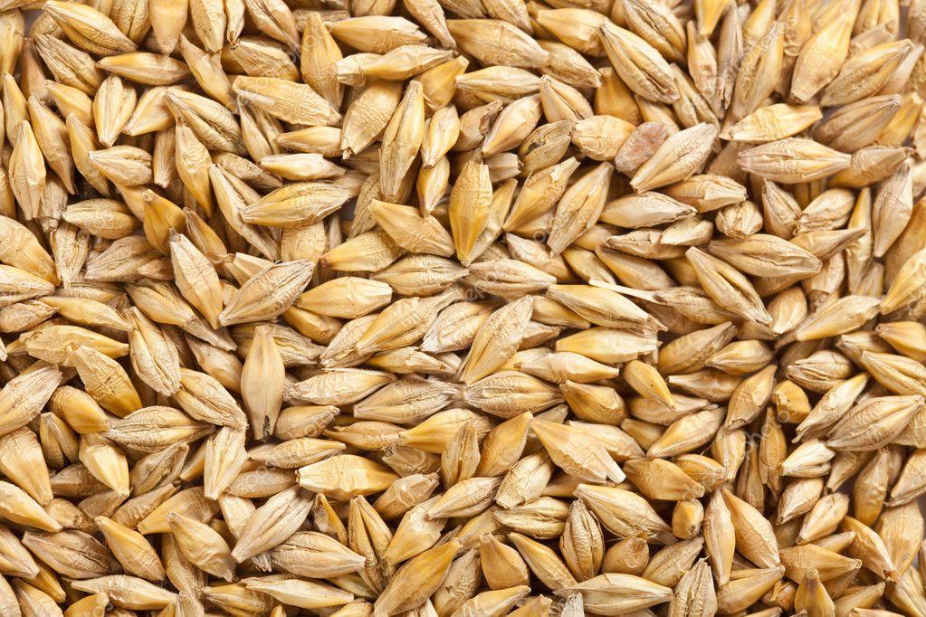 depositphotos_2521176-stock-photo-barley-grain