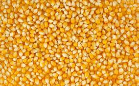kukuruza9