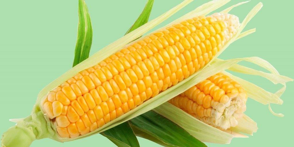 kukuruza4