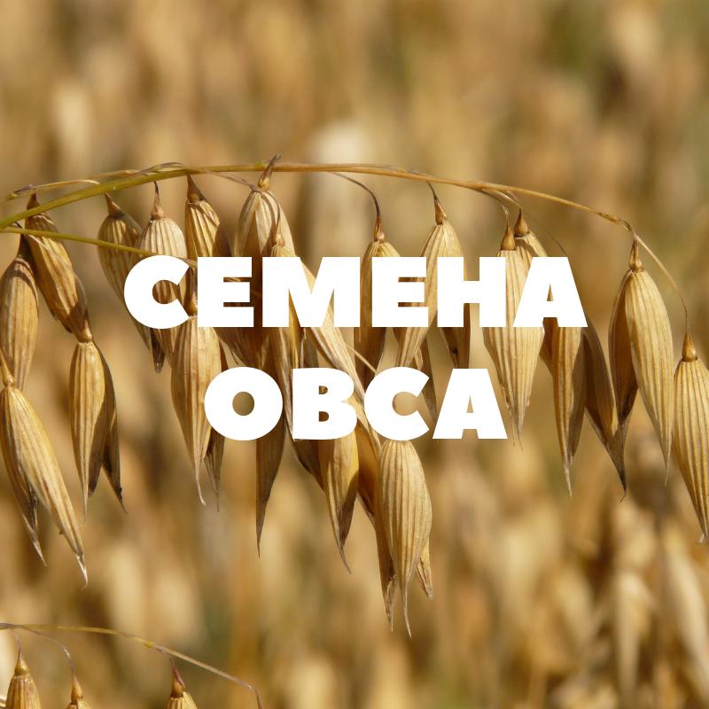 obshhij-oves