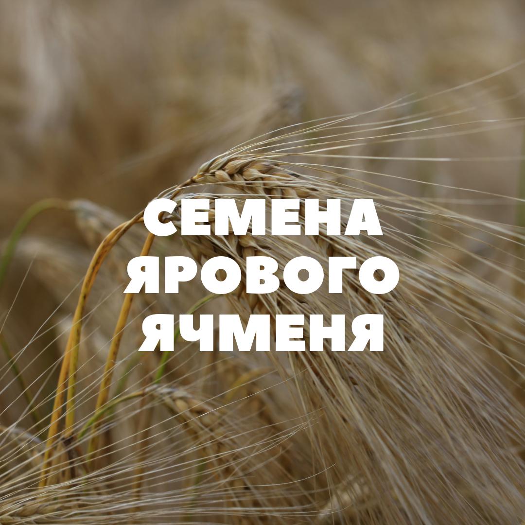 obshhij-yarovoj-yachmen