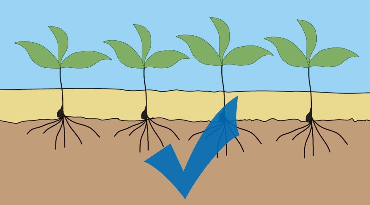 predsetovy-kombinator-kompaktomat-rostlinky-02_2