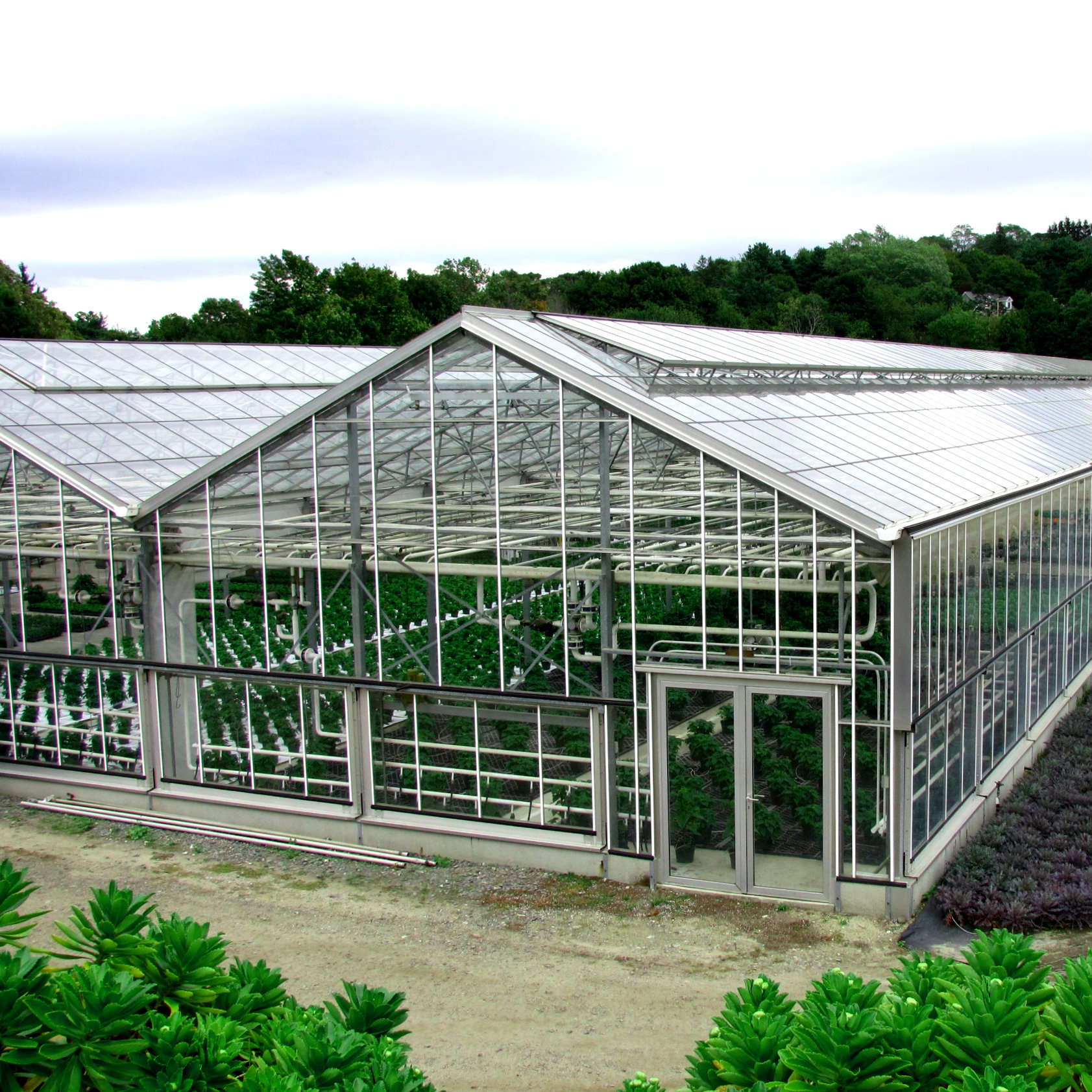 Greenhouse_at_Wilson_Farm_East_Lexington_MA