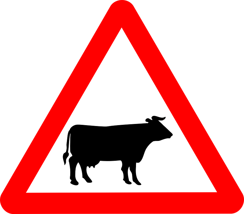 cattle-crossing-48010_960_720